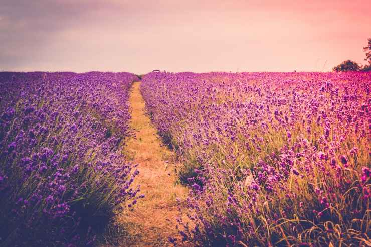 agriculture blooming blossom color