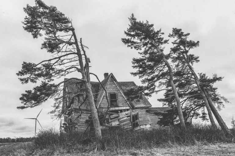 grayscale photography of trees and house
